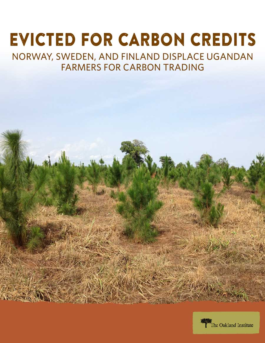 Evicted for Carbon Credits report cover