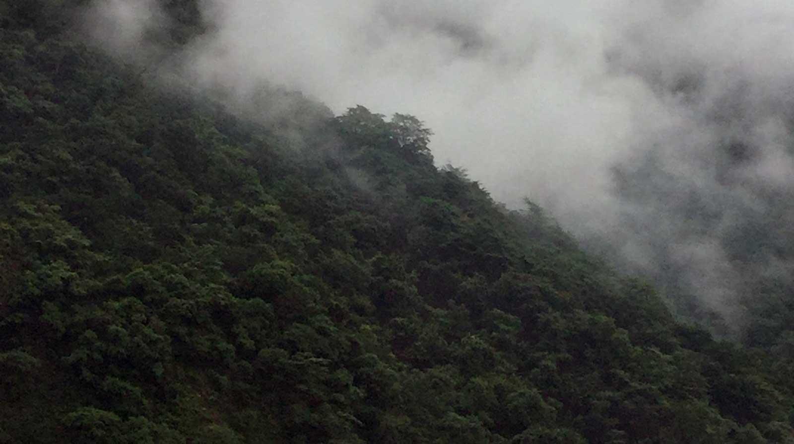 Forest view. Credit: Janhavi Mittal