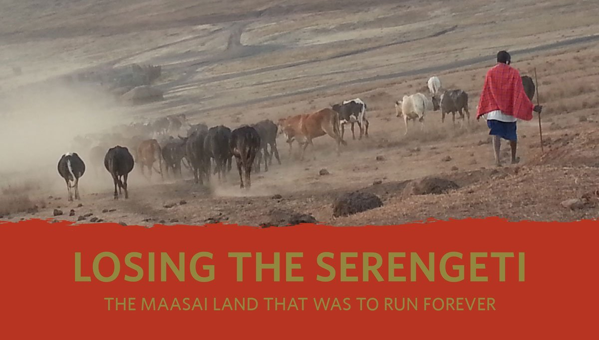 Losing Serengeti cover image