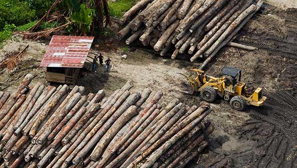 Logging camp in Fergusson Island, Milne Bay.