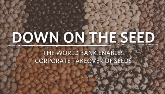 The Oakland Institute's new report Down On the Seed, the World Bank Enables Corporate Takeover of Seeds, exposes that the World Bank's Enabling the Business of Agriculture index reinforces the stranglehold of agrochemical companies and Western nations.