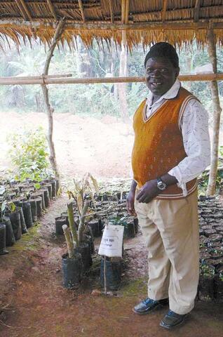 Agroforesterie au Cameroun