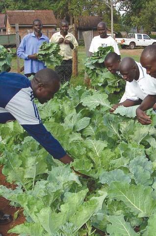 Biointensive Agriculture Training Program in Kenya