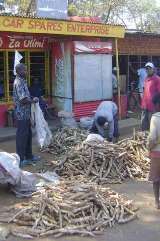 Pour Lutter Contre la Sécheresse, le Malawi et la Zambie Optent Pour le Manioc