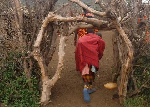 Entrance to a new boma built by the displaced Maasai. Credit: The Oakland Institute