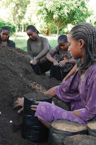 Low External Inputs Technologies and Biodiversity in Ethiopia