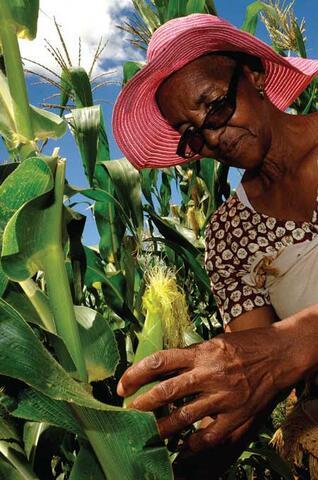 The Machobane Farming System in Lesotho