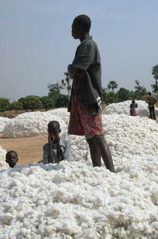 Organic Cotton Production in West Africa