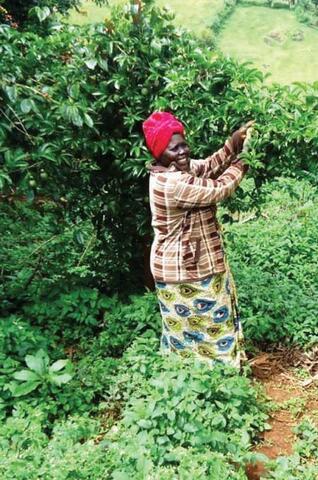 Farmer Participatory Research (FPR) in Uganda