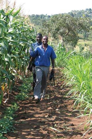 Biological Pest Control: Push-pull in East Africa