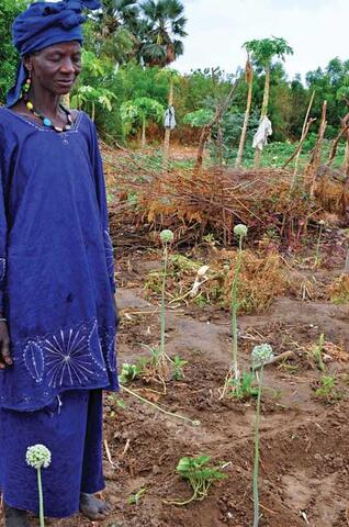 Ecologically-based Rural Development in Mali