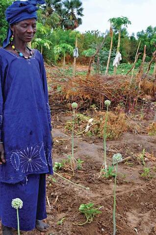 Ecologically-based Rural Development in Mali