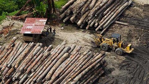 Logging camp in Fergusson Island, Milne Bay. Credit: Paul Hilton/Greenpeace.