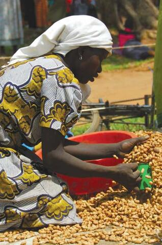 Seed Fairs in Post-conflict Situations