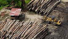 Logging camp in Fergusson Island, Milne Bay. Credit: Paul Hilton/Greenpeace.