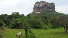 Sigiriya fortress in the northern Matale District. Photo: The Oakland Institute