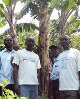 Tackling Banana Wilt Disease in the Democratic Republic of Congo (DRC)