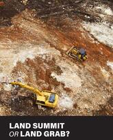 Gilford Ltd. clearing land in West Pomio © Paul Hilton / Greenpeace