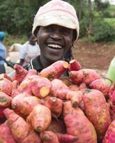 Sweet Potato to Fight Vitamin A Deficiency and Reduce Malnutrition